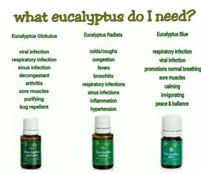 168e938ae7e331e677b862985a70a031--buy-essential-oils-eucalyptus-essential-oil