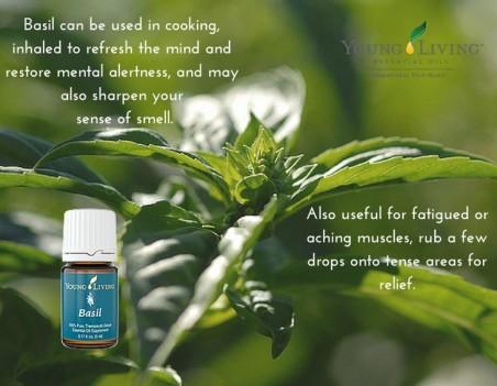 d8eaa469fe30f6124b4d6f25b614201f--basil-essential-oil-essential-oils
