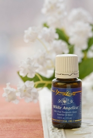 white-angelica-essential-oil