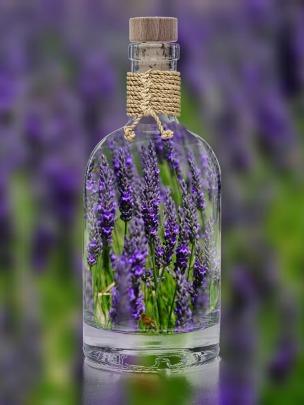 lavender-1490788_1920