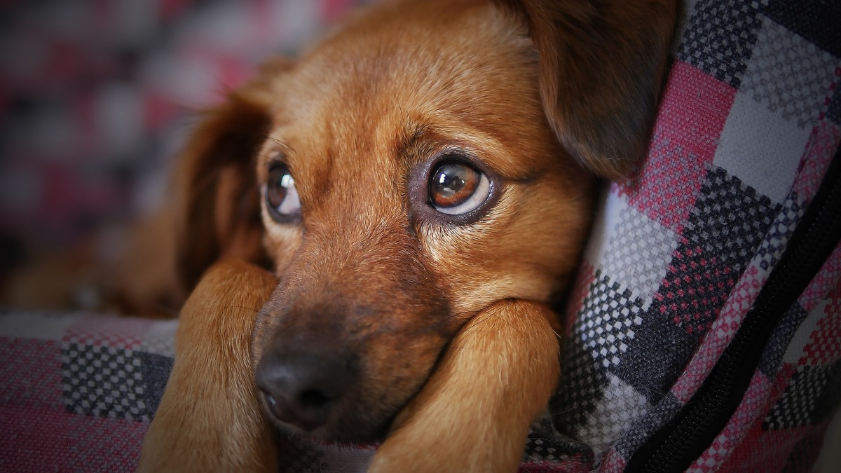Natural Ways to Help Your Neurotic Dog